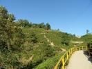 Ältester Teegarten