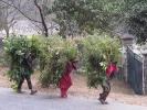 Frauen tragen Gras