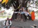 Heiliger Baum
