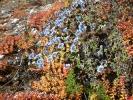 Blumen auf dem Manaslu Wanderweg