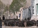 Tibetan sheeps in Lo Manthang