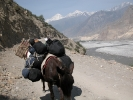 Way from Jomsom to Kagbeni